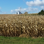 How to Protect Your Stored Grain for 2016