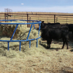 cattle hay feeder